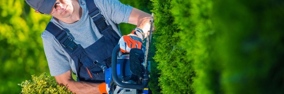 Każdy ogród by mógł cieszyć wymaga regularnej i profesjonalnej pielęgnacji