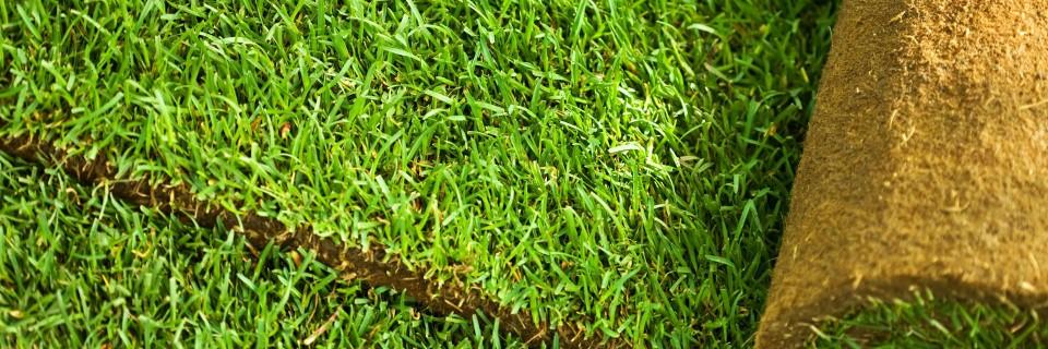 Trawnik to wizytówka twojego ogrodu