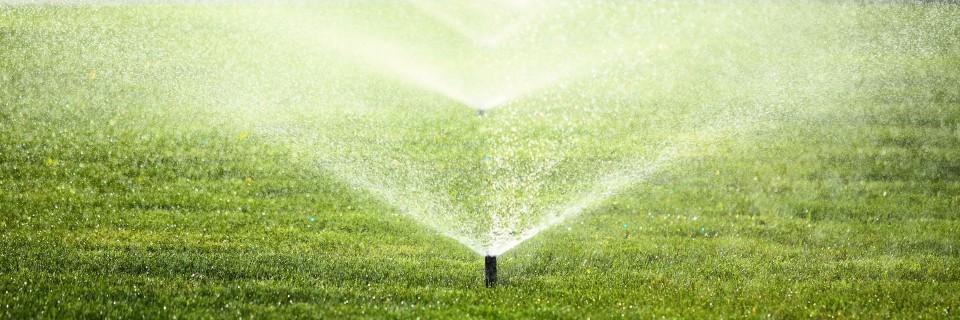Odpowiednie nawadnianie sprawi, że rośliny i trawnik będą cały czas zielone.
